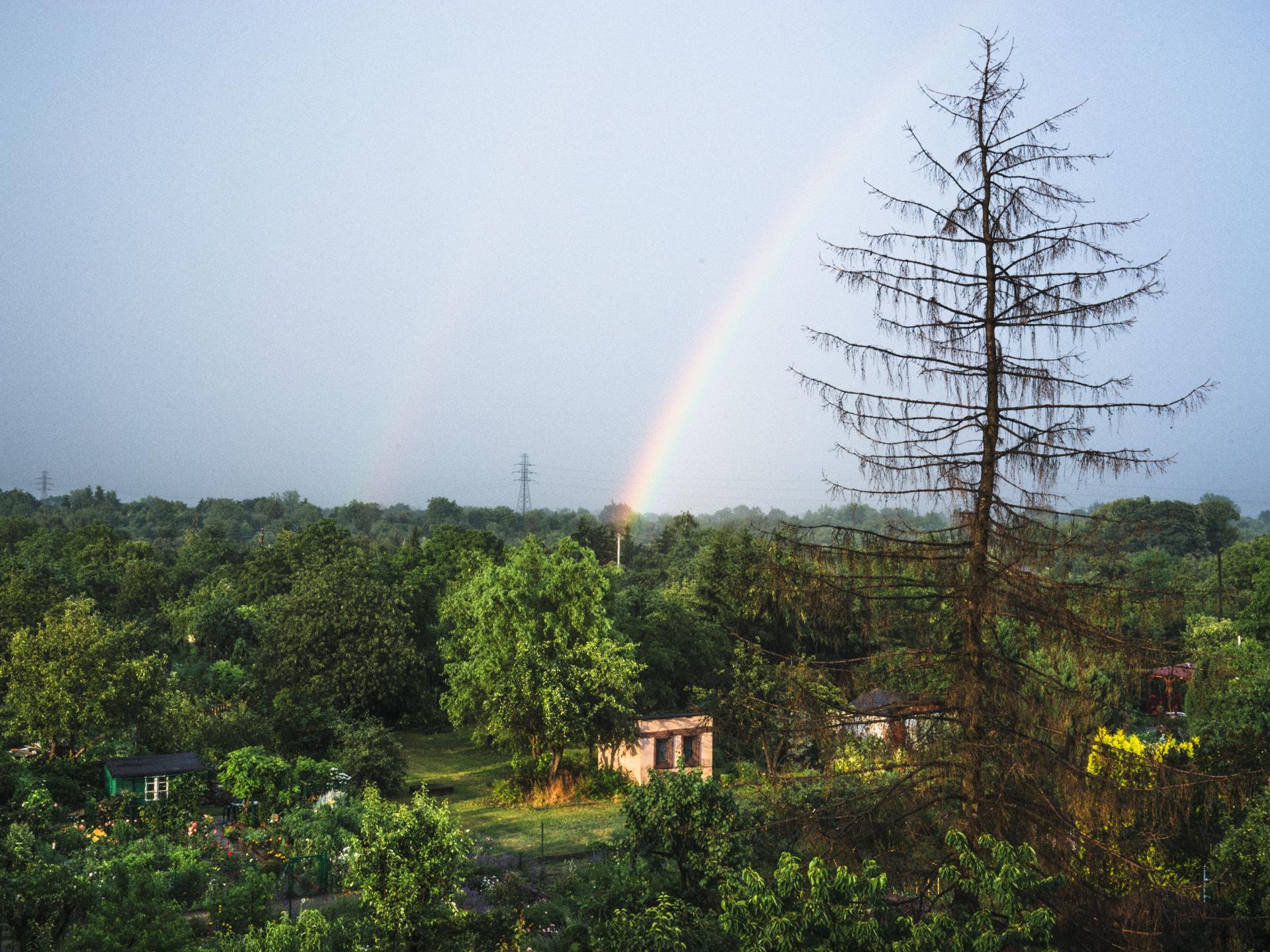 Ogródki działkowe zgóry. Nadole ogródki zdużą ilością drzew ialtankami. Nagórze pogodne niebo. Liście drzew są intensywnie zielone. Napierwszym planie modrzew bezigieł. Naśrodku nieba tęcza.